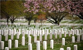 Monuments Arlington National Cemetery At Washington